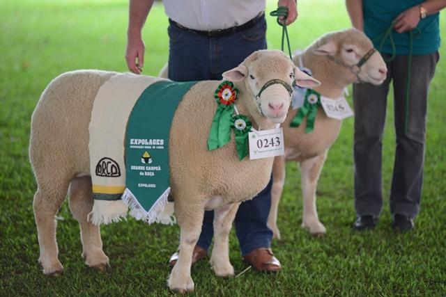 Nesta quinta-feira (16 10) passaram pela pista de julgamento cerca de 80  ovinos de diferentes raças e vindos de cabanhas de diversos lugares de  Santa ... a3b8f3bc9aa