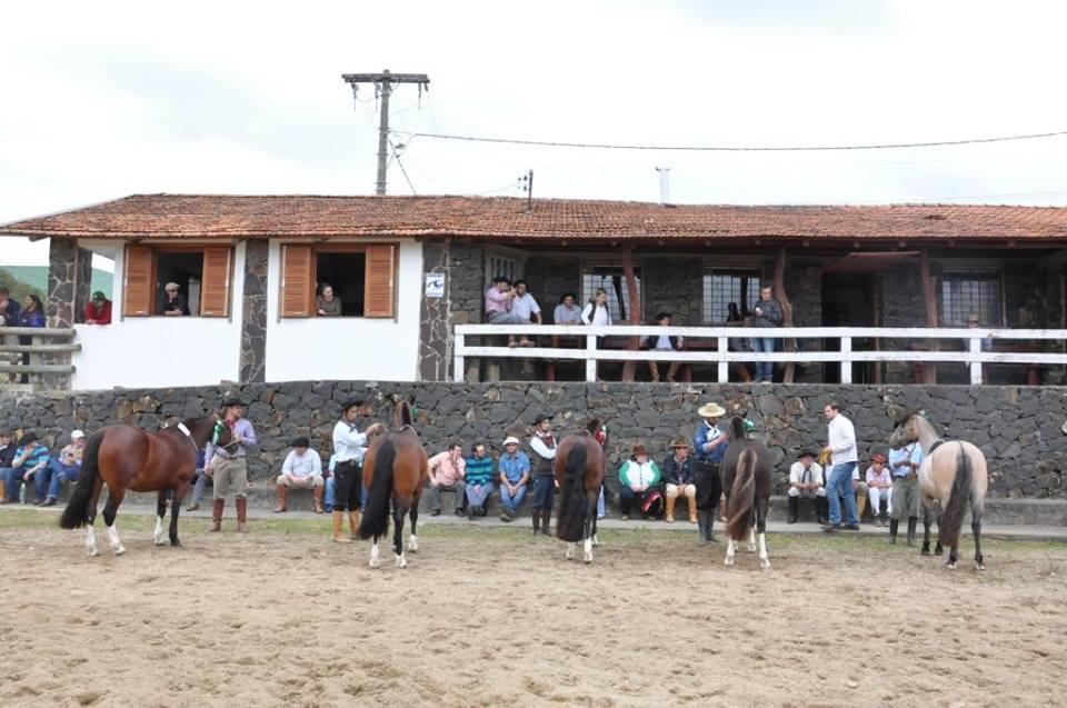 Ao todo foram julgados 62 animais vindos de diferentes regiões de Santa  Catarina 978ca6c1d62